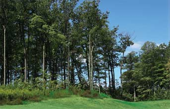Our center is located on 62 acres of wooded countryside that is three miles north of downtown Plymouth, Wisconsin.